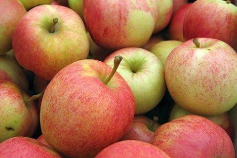 Оплот ТВ об урожае Суперинтенсивного яблоневого сада. (Видео)