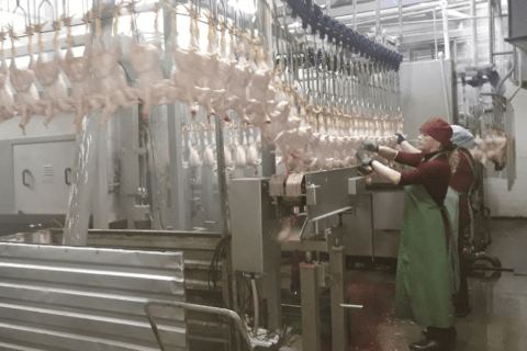 Модернизация оборудования на ГП «Шахтерская птицефабрика» (видео)