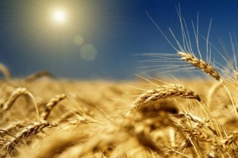 ГК «Аграрный Донбасс» рассчитывает на хорошую урожайность зерновых и технических культур в 2020 году