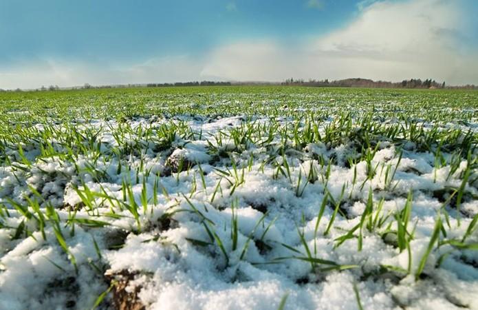 В Новоазовском районе стартовали весенне-полевые работы