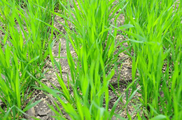На ГП «Заря Агро» завершены работы по внесению удобрений по мерзлоталой почве для озимых культур