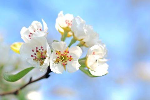 «Сады Донбасса» проводят работы по благоустройству и уходу за яблоневым садом