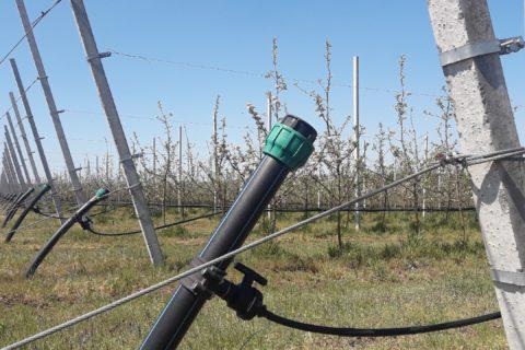 В суперинтенсивном яблоневом саду проходят работы по наладке и запуску капельного полива (видео)