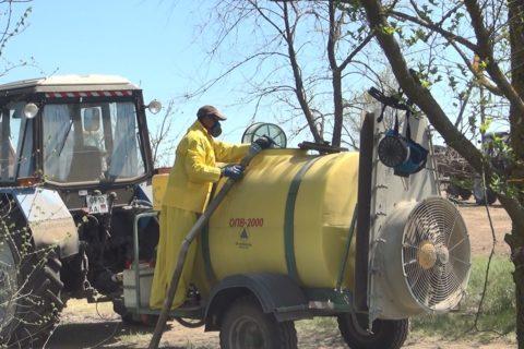 В суперинтенсивном яблоневом саду проходит обработка деревьев от вредителей и болезней (видео)
