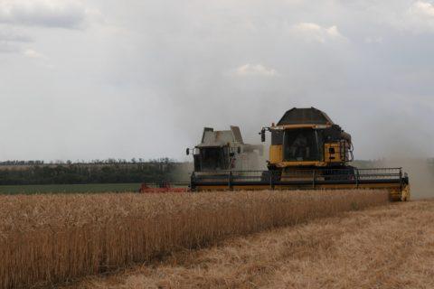 На ГП «Заря Агро» завершилась уборка ранних зерновых культур (видео)