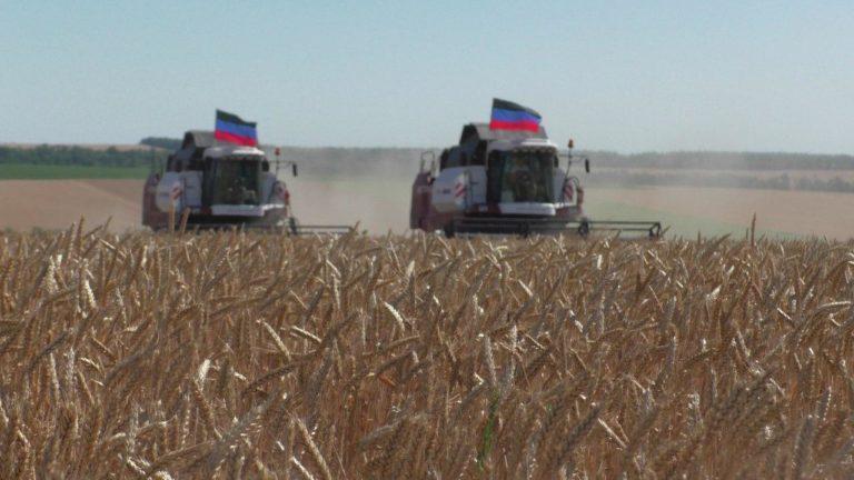 На ГП «Заря Агро» уборка ранних зерновых культур выполнена на 50% (видео)