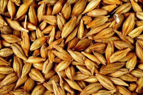 ГП «Заря Агро» получило разрешение на экспорт ячменя
