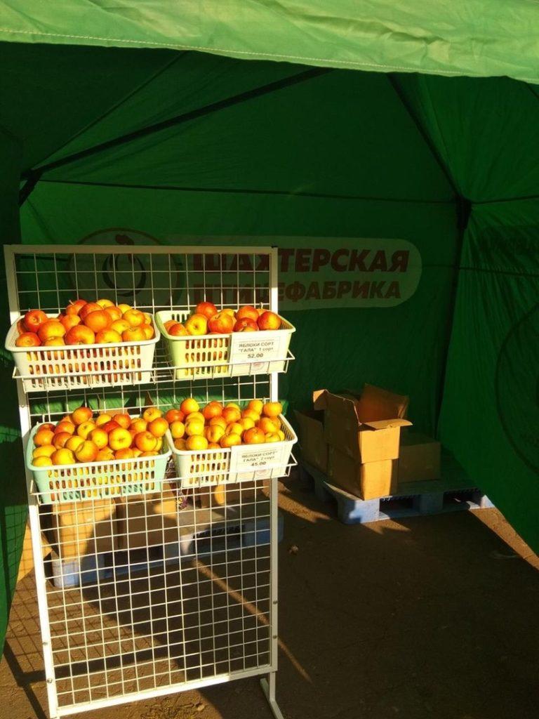 На ярмарке в Харцызске были представлены на реализацию яблоки из суперинтенсивного яблоневого сада (фото)