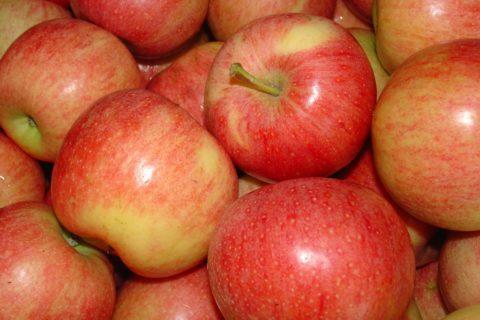 Филиал «Сады Донбасса» реализует оптом и в розницу яблоки из суперинтенсивного яблоневого сада