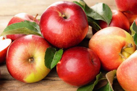 В суперинтенсивном яблоневом саду окончен сбор урожая сорта «Гала»