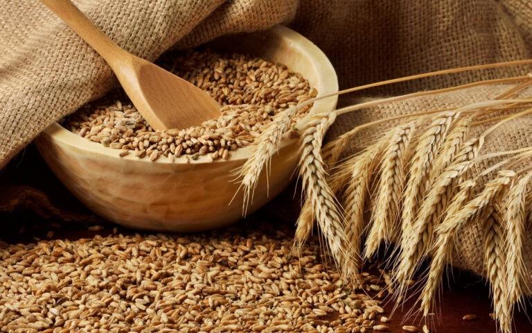 ГП «Заря Агро» выделены квоты на экспорт пшеницы 2-4 класса