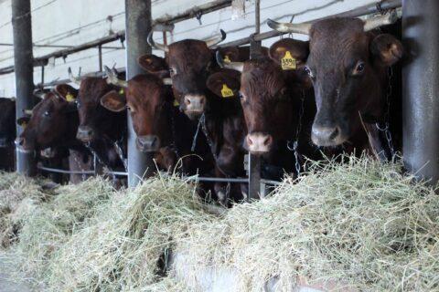 ГП «Заря Агро» продолжает развивать направление молочного животноводства