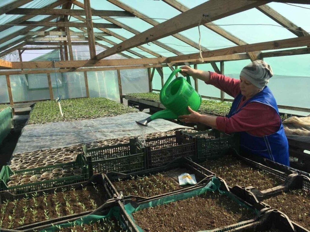 Отделение «Таировское» ГП «Агро-Донбасс» развивает направление выращивания овощей в закрытом грунте (фото)